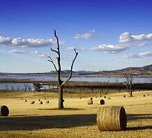 Make Hay While the Sun Shines by David Haviland