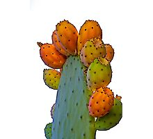 Cactus Apples Photographic Print