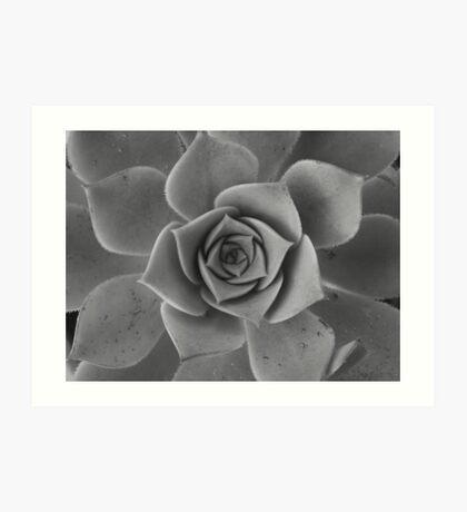 Black & white petals Art Print