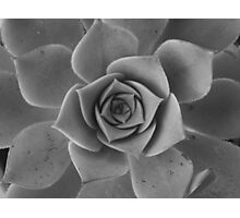Black & white petals Photographic Print