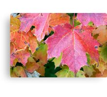 Canadian Autumn Maple Leaves Canvas Print