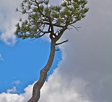 Reaching For the Sky by John Butler