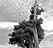 Solitary Sentinel in B&W by John Butler