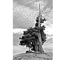Solitary Sentinel in B&W Photographic Print