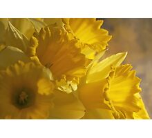 Big, Big Yellow Photographic Print