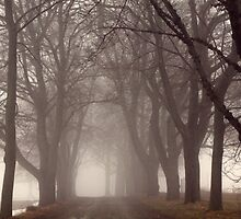 Fog-Shrouded Lane by John Butler