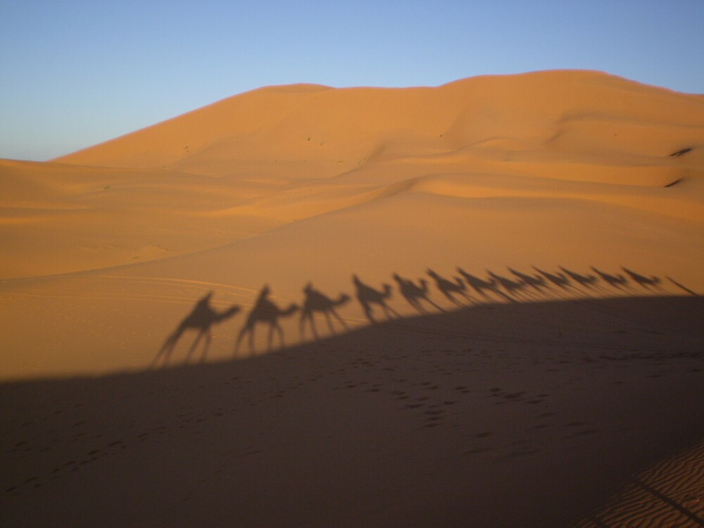 In the Sahara by Tim Marshall