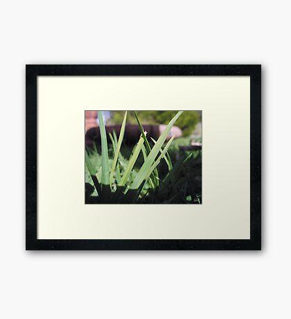 Suburban Jungle Framed Print