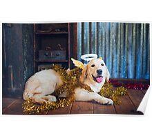 Colour Christmas Angel-dog Poster