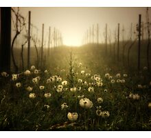 The Vineyard by Aaron .