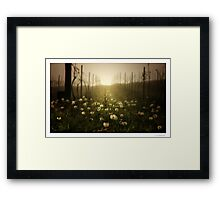 The Vineyard Framed Print