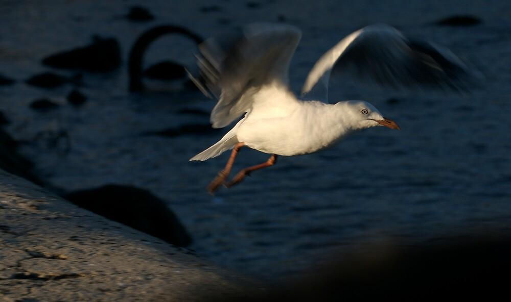 gull launch by Melinda Kerr