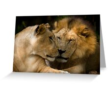 Feline Romance Greeting Card