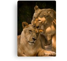 Sisterly love Canvas Print