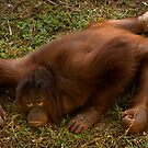 Crouching Ape, Hidden Assets by Frank Yuwono