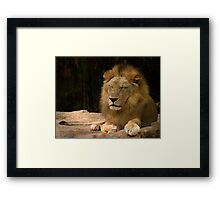 Time for a Royal Nap Framed Print
