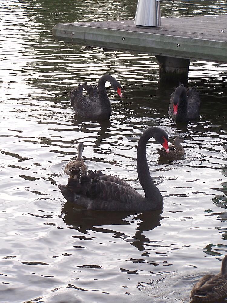 Swans by Princessbren2006