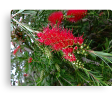Funky Red Flower Canvas Print