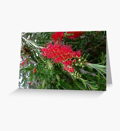 Funky Red Flower Greeting Card
