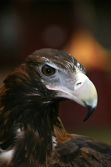 Eagle Eye 1 by Andrew Wilson