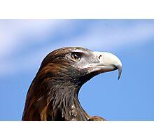 Eagle Eye 3 Photographic Print