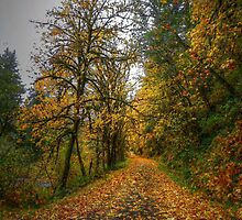 Old Wagon Road Fall Colors by Charles & Patricia   Harkins ~ Picture Oregon