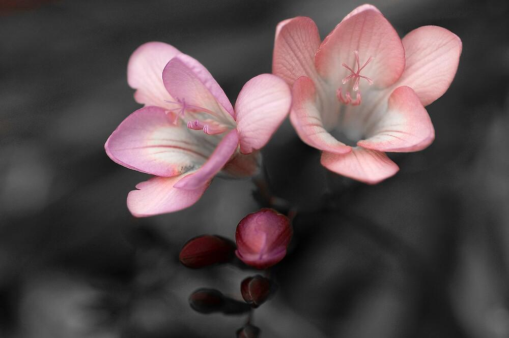 B/W flower01 by Katie101