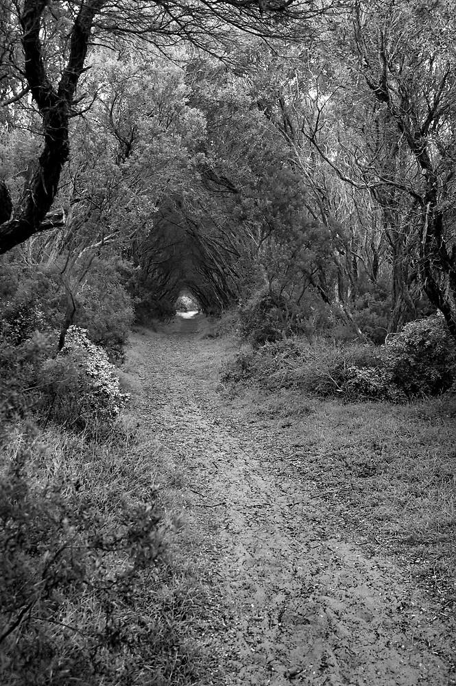 kili trail by Katie101