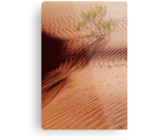 Lone Shrub and Sand Patterns, Simpson Desert Metal Print