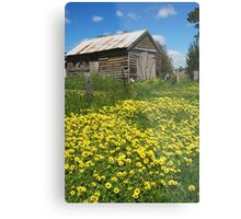 Yellow Daisies Snake Valley Metal Print