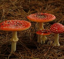 Red Fungi,Otway Ranges by Joe Mortelliti