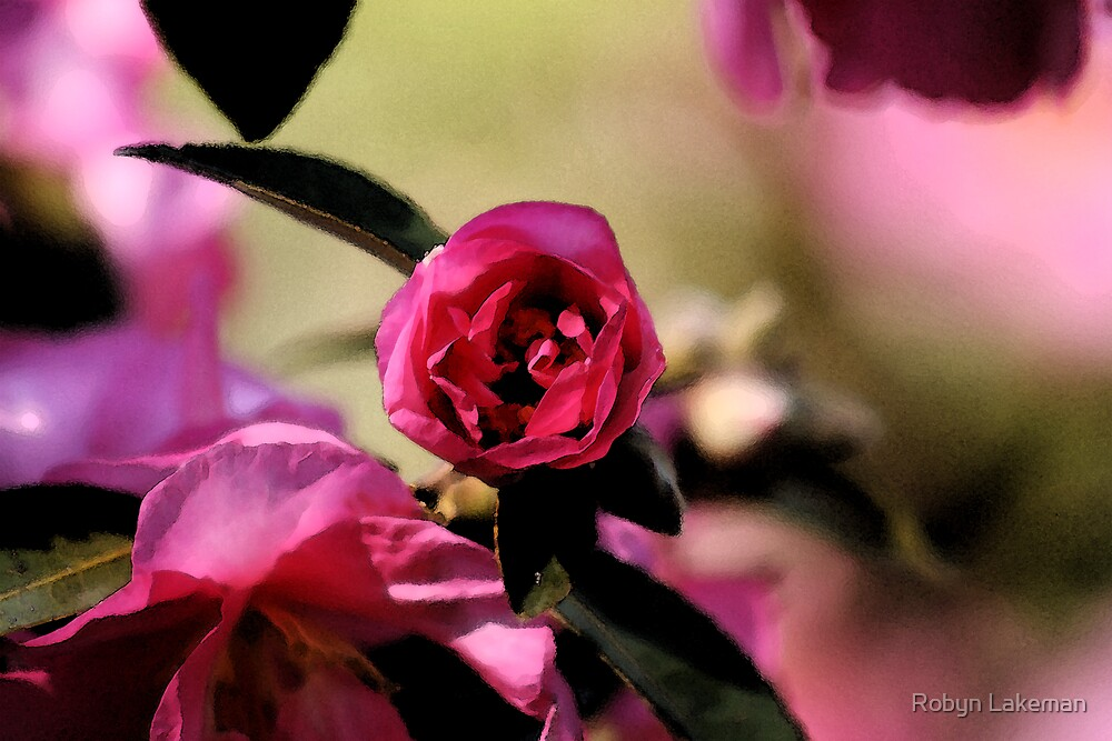 Pink camelia by Robyn Lakeman