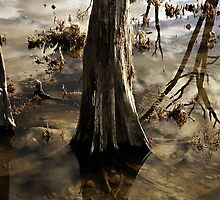 Elements by GCPhoto