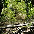 Beyond the swinging bridge by CapturedByKylie