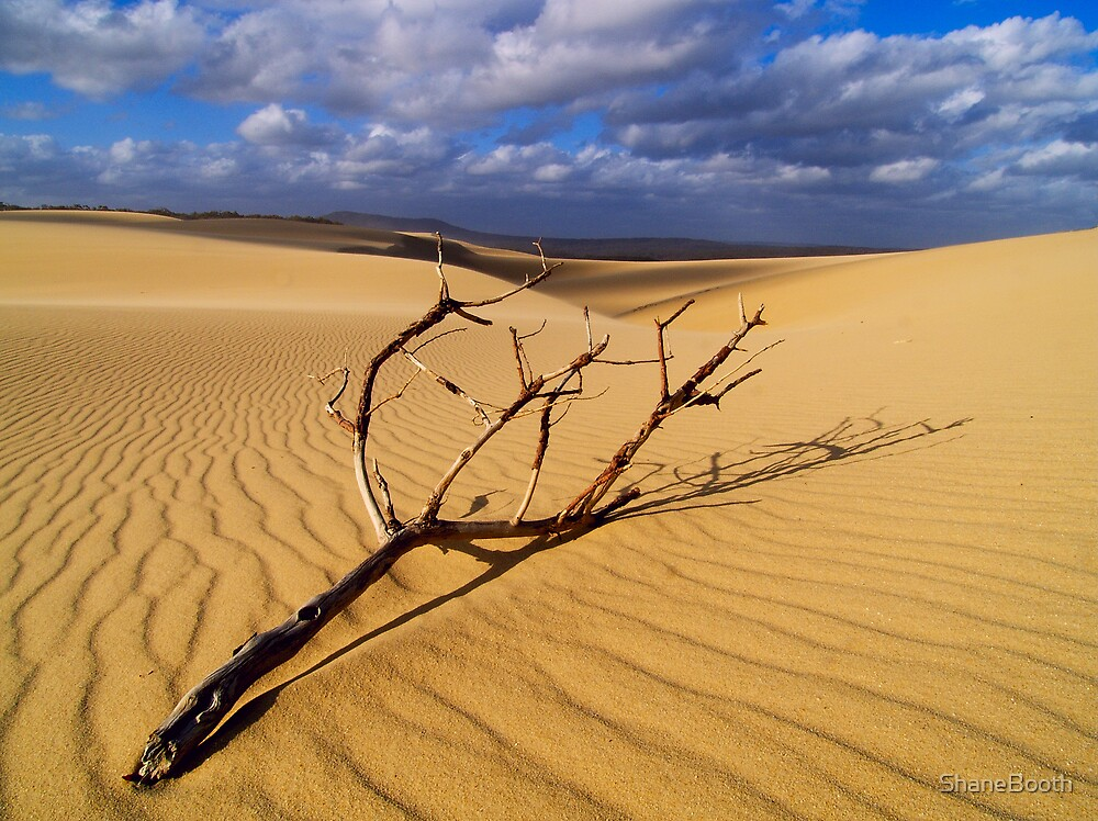 Lone stick at dunes by ShaneBooth