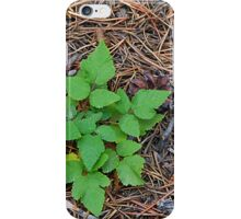 Forest floor iPhone Case/Skin