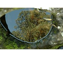 Reflections in a crocodile eye Photographic Print
