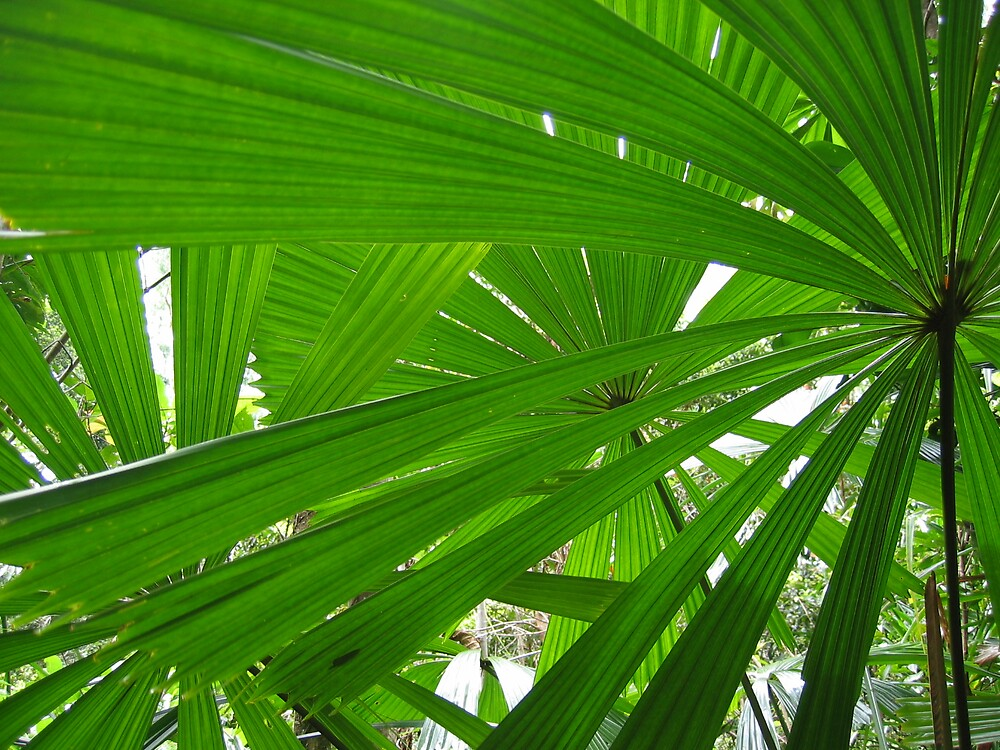 Perfect geometry - Daintree by marklow