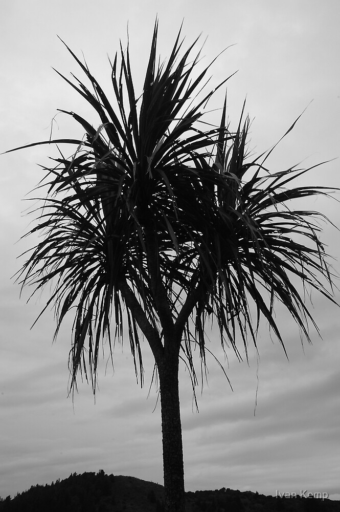Cabbage Tree Silouette by Ivan Kemp