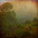 Cambewarra Mountain Lookout by Lea Hawkins
