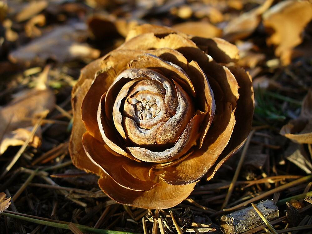 Autumn Flower by Treegirl