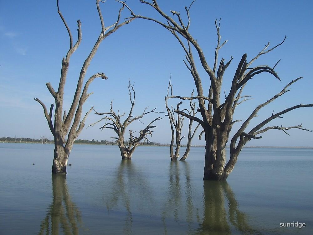 Dead Gum Trees by sunridge