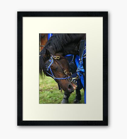 A knights horse Framed Print