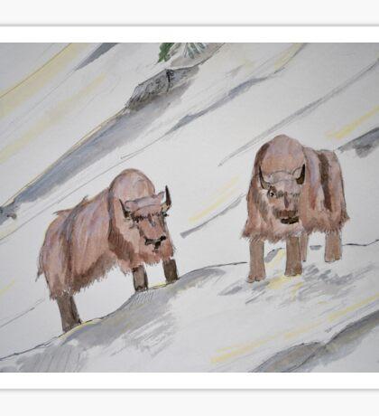 Snowy Bison Sticker