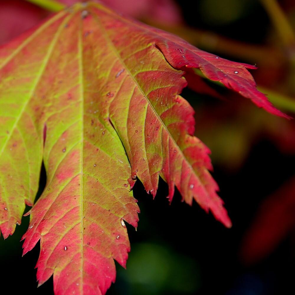 Stunning Autumn Leaf by Emma Newman