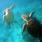 Loggerhead standoff by jenitae