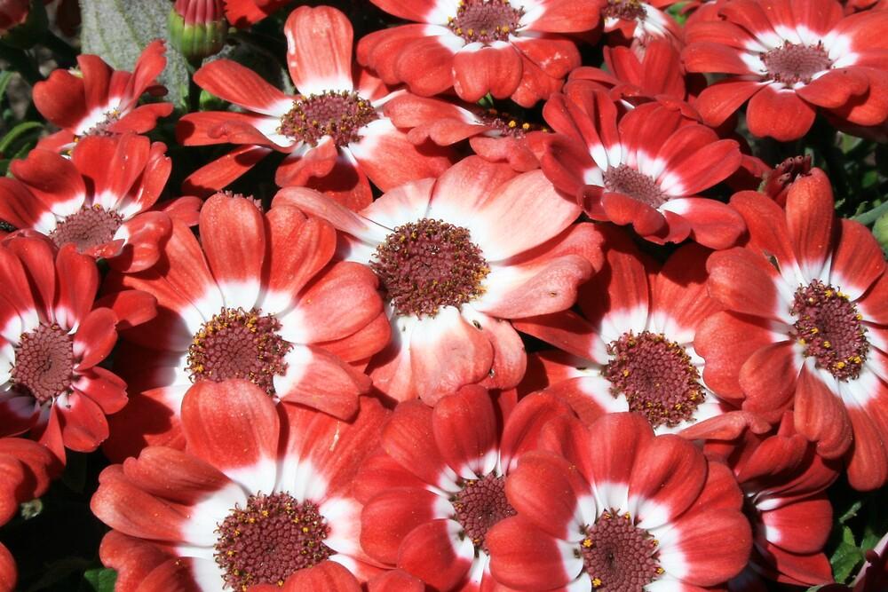 Flowers by JennyDiane