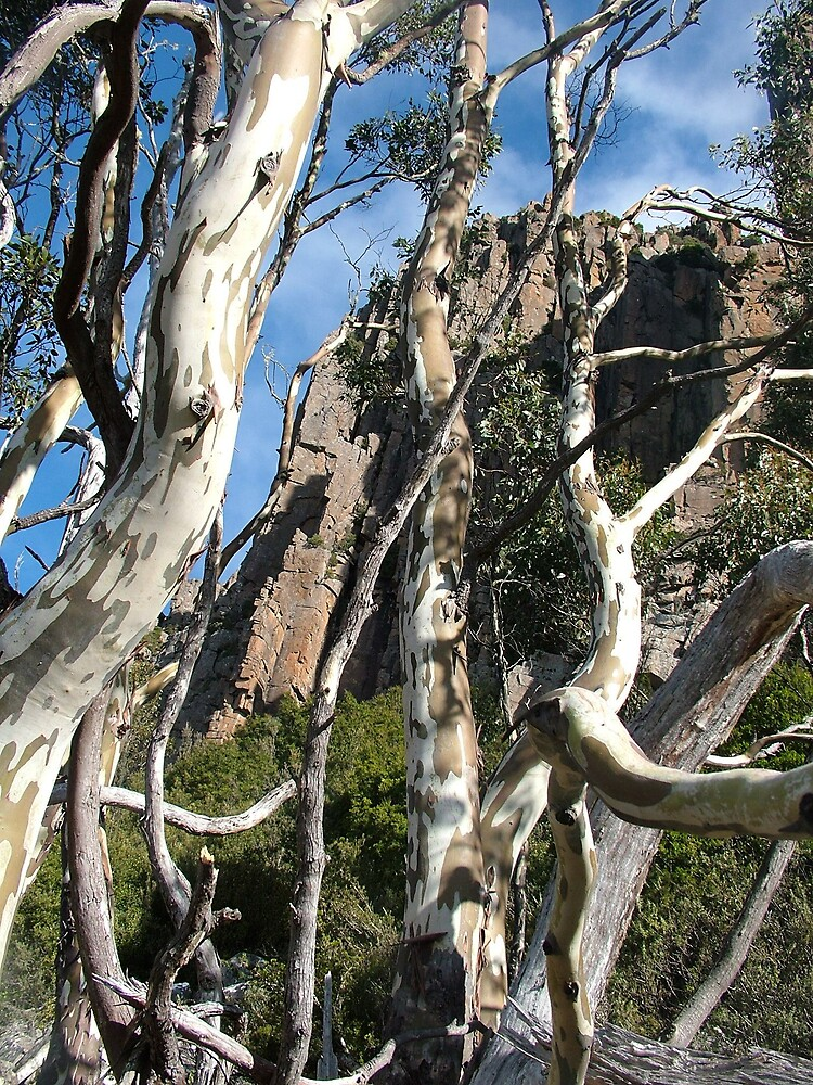 Eucalyptus on Mt Wellington by JennyDiane