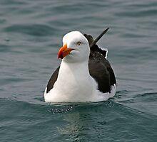 Seagull by JennyDiane