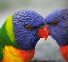 Rainbow Lorikeets by Ally